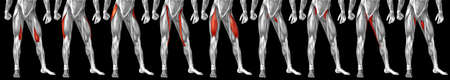 Concept or conceptual 3D human upper leg anatomy or anatomical and muscle isolated on black background metaphor to body, tendon, fit, foot, strong, biological, gym, fitness, skinless, health medical Banco de Imagens