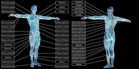 3D illustration of a concept human man anatomy and muscle textbox isolated on black background metaphor to body, tendon, spine, fit, builder, strong, biological, skinless, shape posture health medical