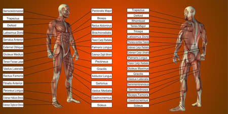 3D illustration of a concept human man anatomy and muscle textbox isolated on red background metaphor to body, tendon, spine, fit, builder, strong, biological, skinless, shape posture health medical