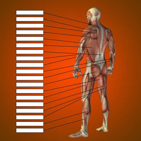 3D illustration of a concept male human anatomy, a man with muscles and textbox on red gradient for body, tendon, fit, builder, strong, biological, skinless, shape, muscular, posture, health medical