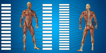 3D illustration of a concept human man anatomy and muscle textbox isolated on blue background metaphor to body, tendon, spine, fit, builder, strong, biological, skinless, shape posture health medical
