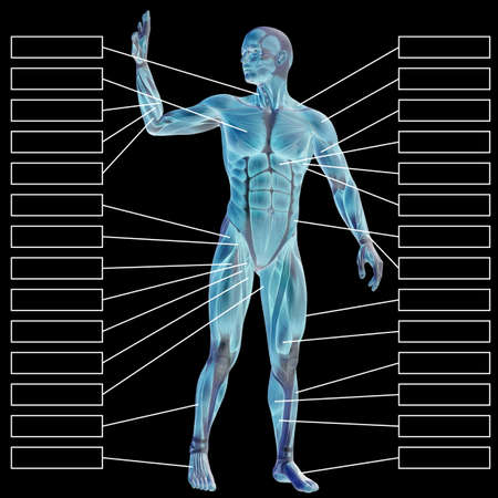 3D illustration of a concept male human anatomy, a man with muscles and textbox on black gradient for body, tendon, fit, builder, strong, biological, skinless, shape, muscular, posture, health medical