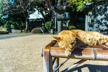 Sleepy cat on the carriage in the noon Stock Photo