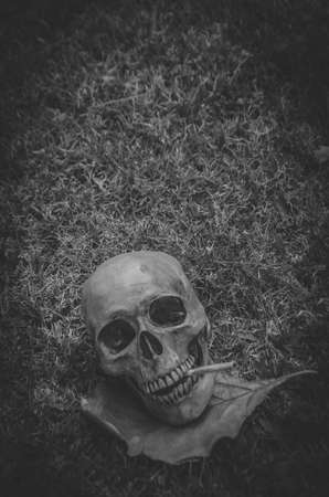 fag: Human skull smoking the cigarette  on the grass background , Vintage black white tone ,  still life photography style.