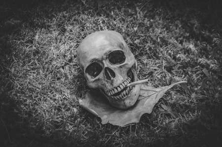fag: human skull smoking the cigarette on grass background , Vintage black white tone ,  still life photography style Stock Photo