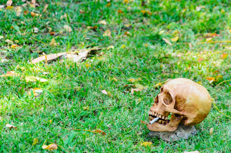 Human skull smoking the cigarette on the grass background .