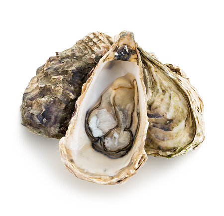 a shell: Oysters isolated on a white background