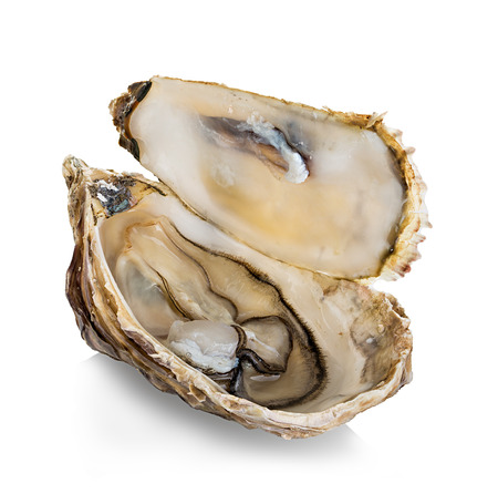 oyster: Oysters isolated on a white background