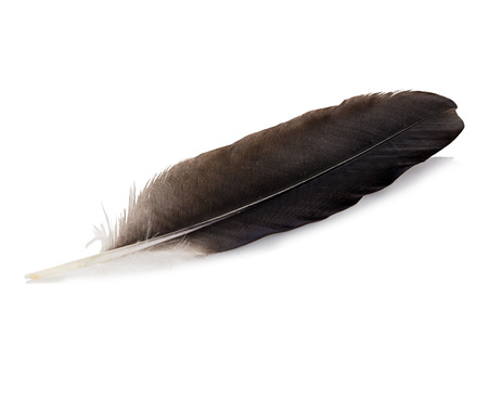 feather pen: Feather pen isolated on white background