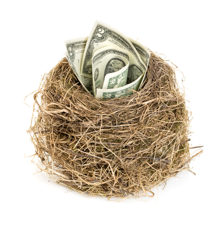nest egg: Original birds nest with dollar bills. New business starting by banknotes. Business concept.