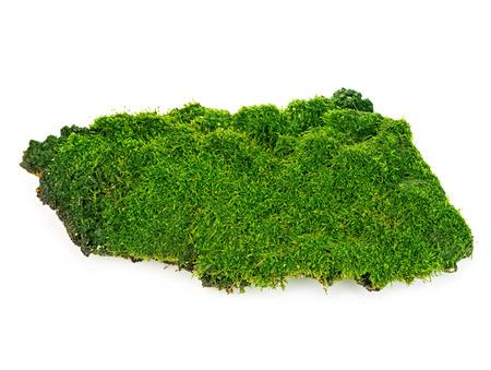 아름 다운 녹색 이끼 근접 흰색 배경에 고립입니다.