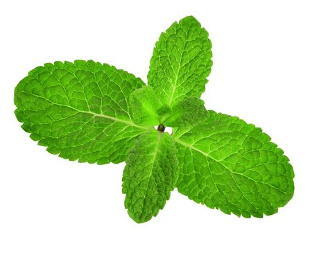 Mint leaves close-up isolated on white background.