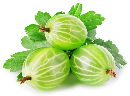 Fresh green gooseberry with leaf close-up isolated on a white background.