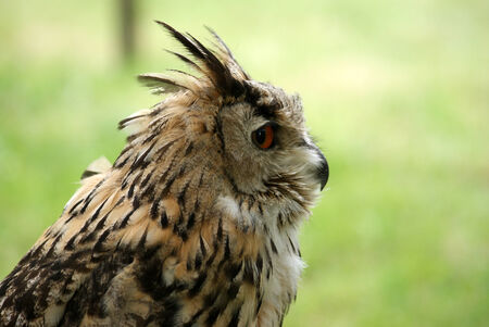 eyes cave: owl close up Stock Photo