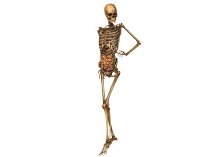 Esqueleto Femenino Con La Anatomía Detallada Fotos, Retratos ...