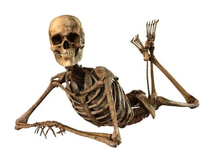 자세한 해부학 여성 뼈대