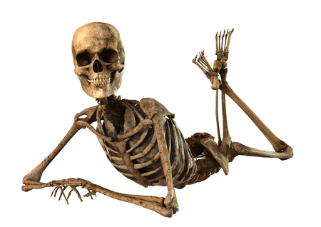 female skeleton with detailed anatomy