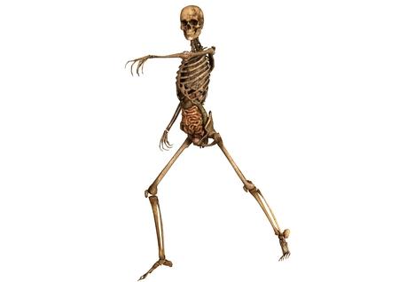 Bonito Esqueleto Detallada Viñeta - Anatomia del Cuerpo Humano ...