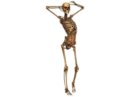 female skeleton with detailed anatomy photo