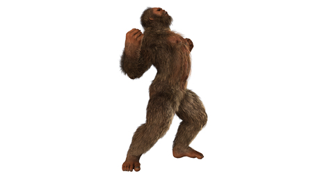abominable: Sasquatch bigfoot seperated on white background