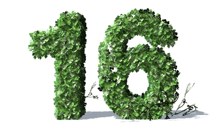 number 16: Number 16 alphabet of green ivy leaves