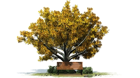 separated: Park bench under tree in summer separated on white background Stock Photo