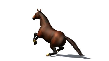 horse jump: brown horse jump isolated on white background