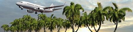 panoramic beach: Passenger airplane in flight over palm trees in sunset panorama