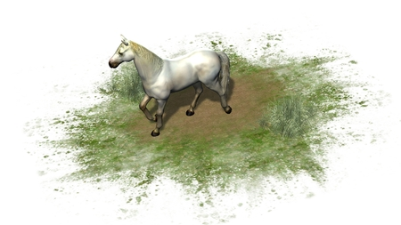 Whitehorse isolated on white background