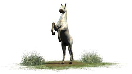 spanish looking: Whitehorse isolated on white background