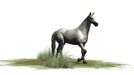 whitehorse: Whitehorse isolated on white background