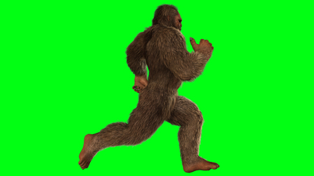 sasquatch: Sasquatch - Bigfoot seperated on greenscreen