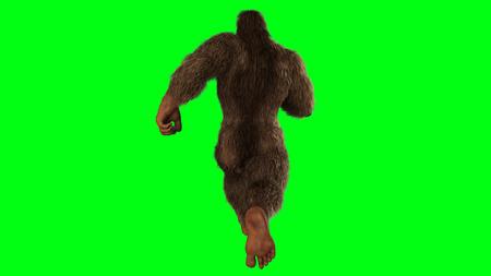 Sasquatch - Bigfoot seperated on greenscreen
