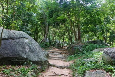 blue mountains tree frog: path to the mountain with big rock and tree