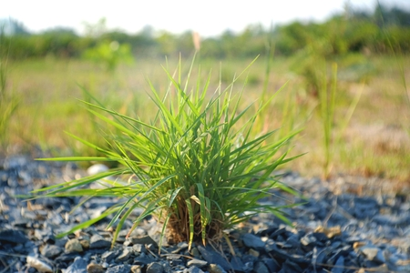 small plant: small plant and rock