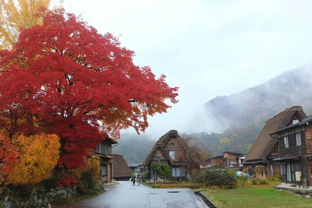 hida: traditional village showcasing a building style known as gassh-zukuri with red and yellow leaf in autumn Stock Photo