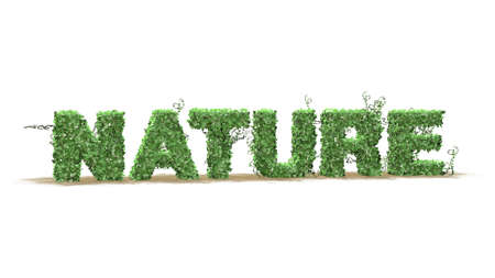 grass area: Nature  logo from green ivy leaves  separated on white background Stock Photo