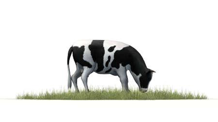 holstein: cow on white background Stock Photo