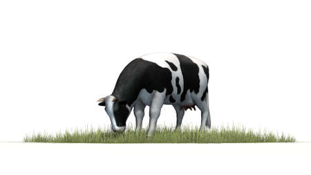 holstein: cow on white background Stock Photo