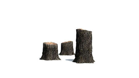 sawn: Tree stump cluster - on white background