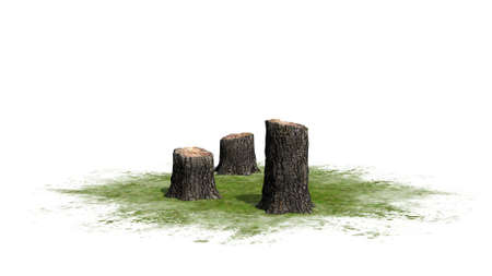 sawn: Tree stump cluster - on white background
