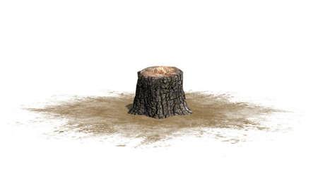 sawn: Tree stump - on white background Stock Photo