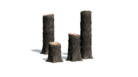 Tree stump cluster - on white background