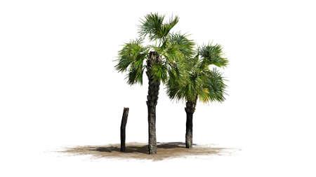 palmetto: Palmetto cluster - separated on white background Stock Photo
