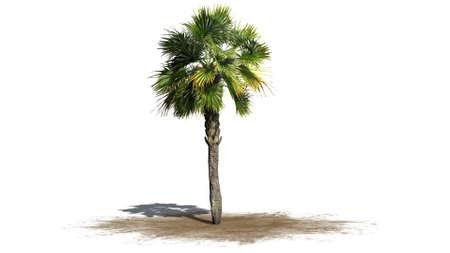 fruta tropical: palmera - separados en el fondo blanco