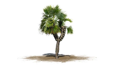 palmetto: palm tree - separated on white background Stock Photo