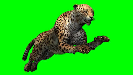 attacker: Cheetah - Green Screen