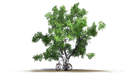 phonebox: bike is standing beside tree - separated on white background