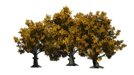 American Beech tree cluster - isolated on white background 写真素材