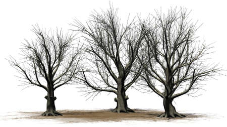 American Beech tree cluster winter - isolated on white background 写真素材 - 115191569